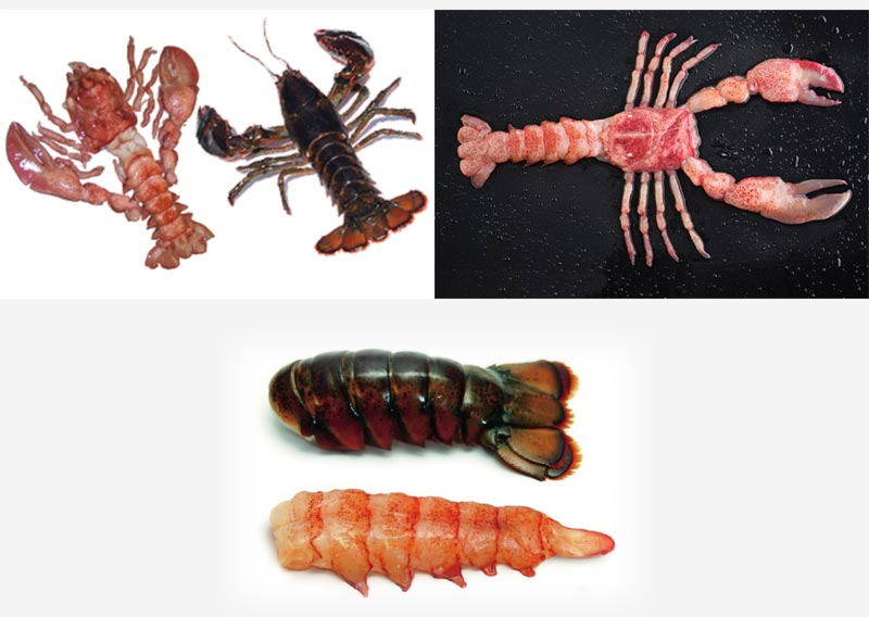 Sampling of HPP Frozen Lobster