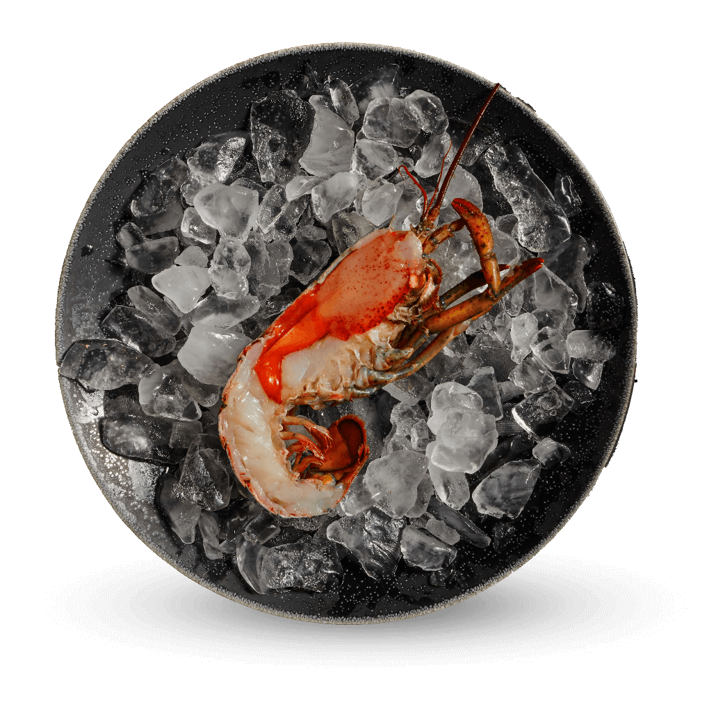 Photo of a Lobster in a bowl of ice